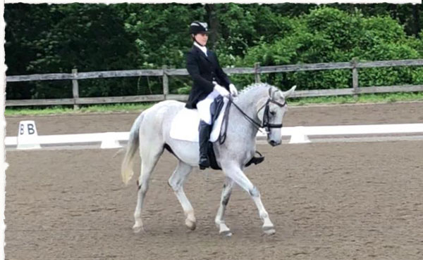 Dressage Lessons And Competitions Painted Dreams Horse Farm